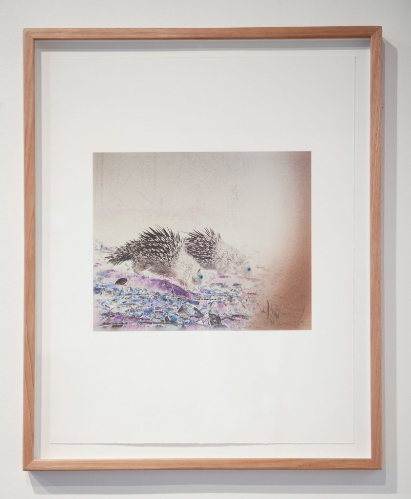 Janet Laurence <em>Fabled 6 – Malayan Porcupine (hystrix brachyura),</em> 2011 camera-trap images of animals in the wild of Aceh, Sumatra archival pigment prints on cotton rag, image 25 x 30 cm