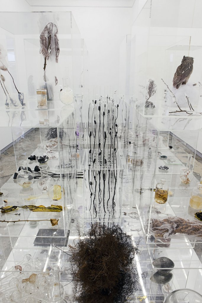 Janet Laurence <em>The memory of nature</em>, 2010 acrylic, scientific glass, dried plants, seeds, sulphur, salt, amethyst, taxidermied owls, shellac, tulle, wood, burnt bones, hand-blown glass, oil paint, mirrors  180 x 160 x 350 cm