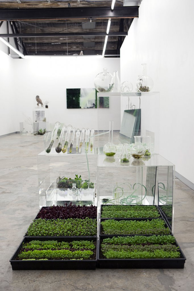 Janet Laurence <em>What can a garden be?</em> 2010 Installation  view