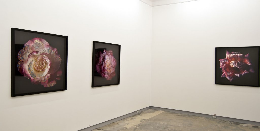 Phillip George <em>Edge of Empire, 2010 Installation view </em> 