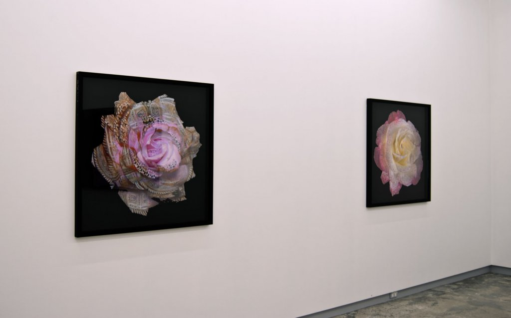Phillip George <em>Edge of Empire, </em>2010 Installation view